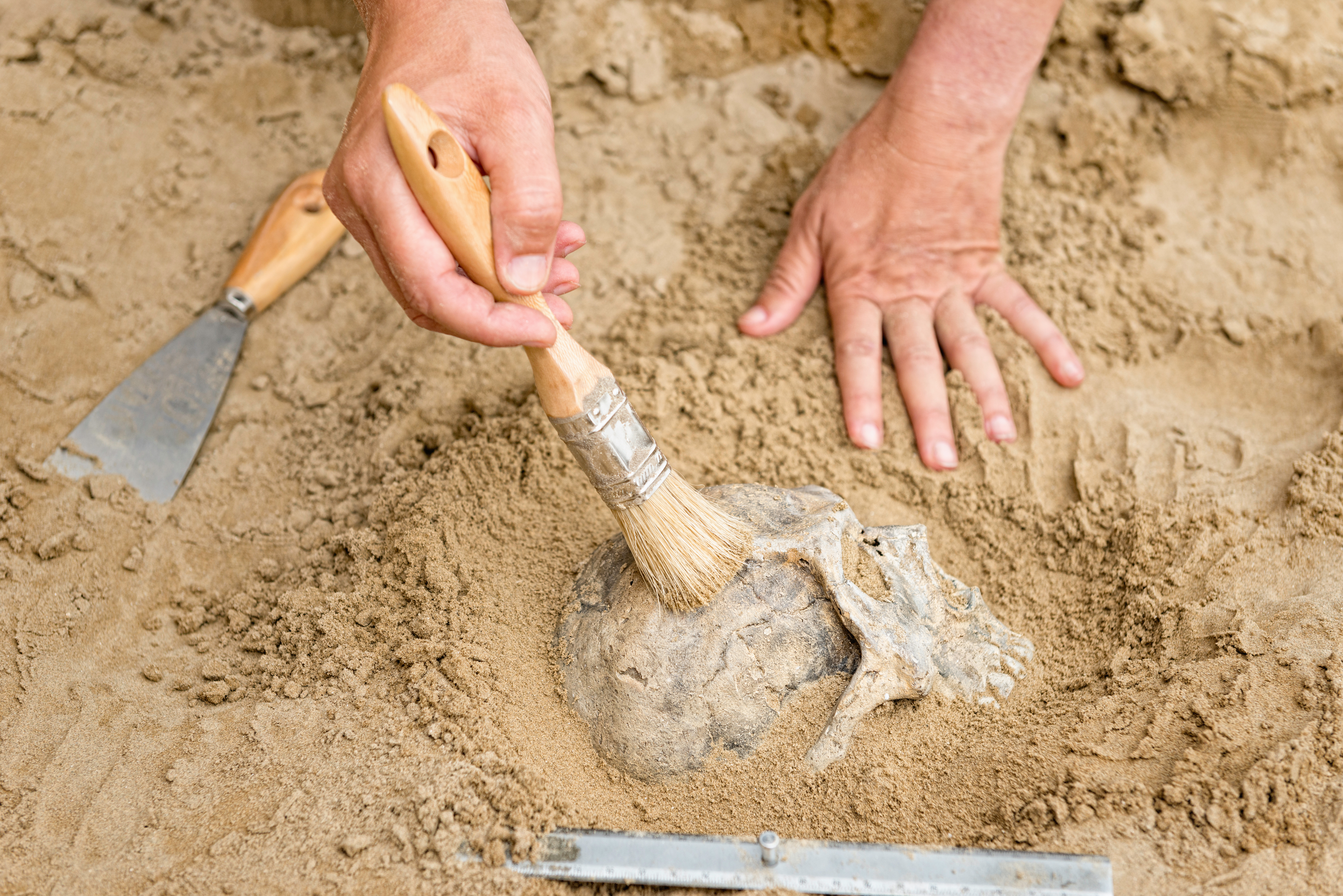 Archeologist uncovers skull