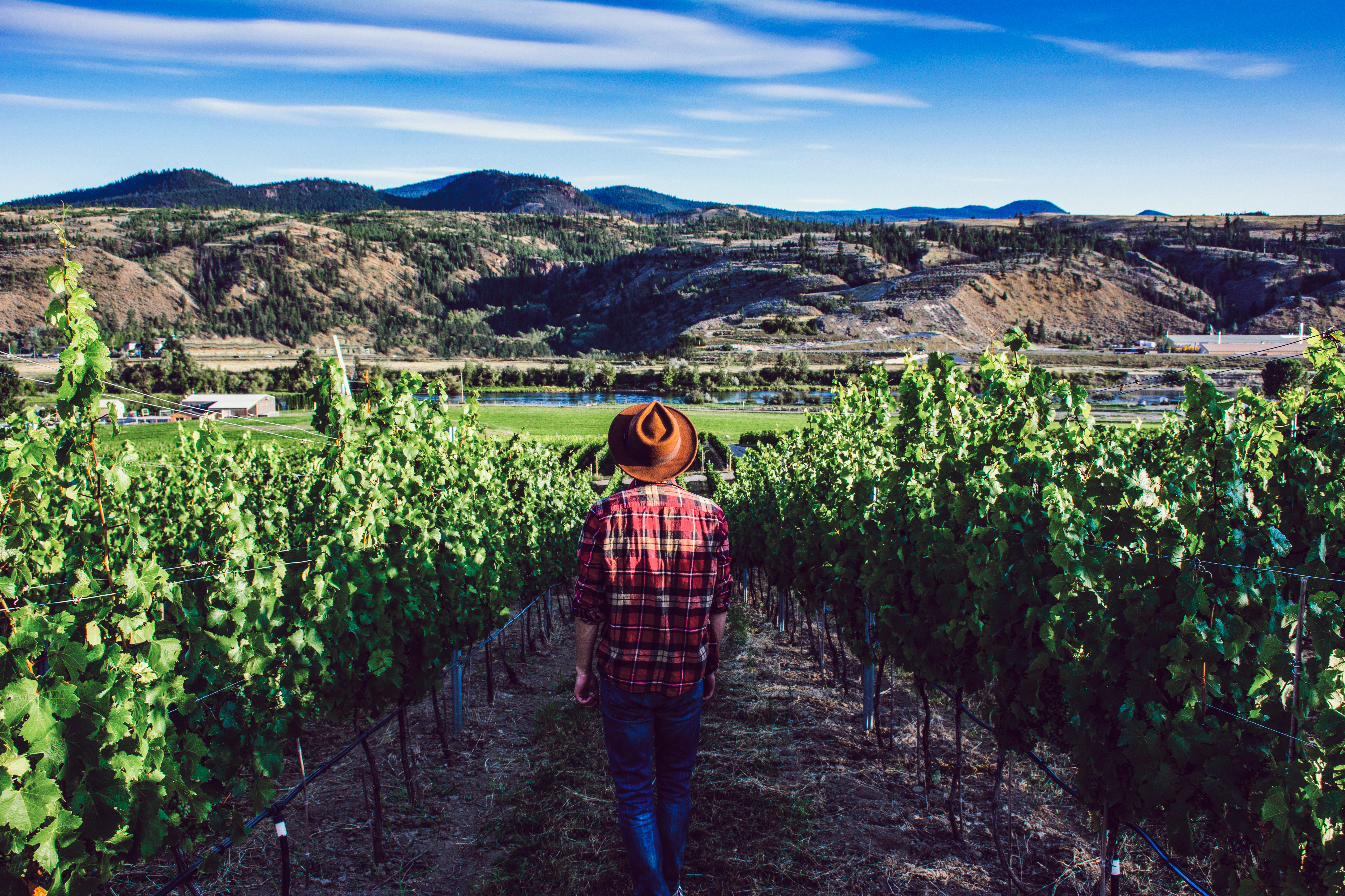 Swoop | a person standing inside the grape vineyards in Kamloops British Columbia