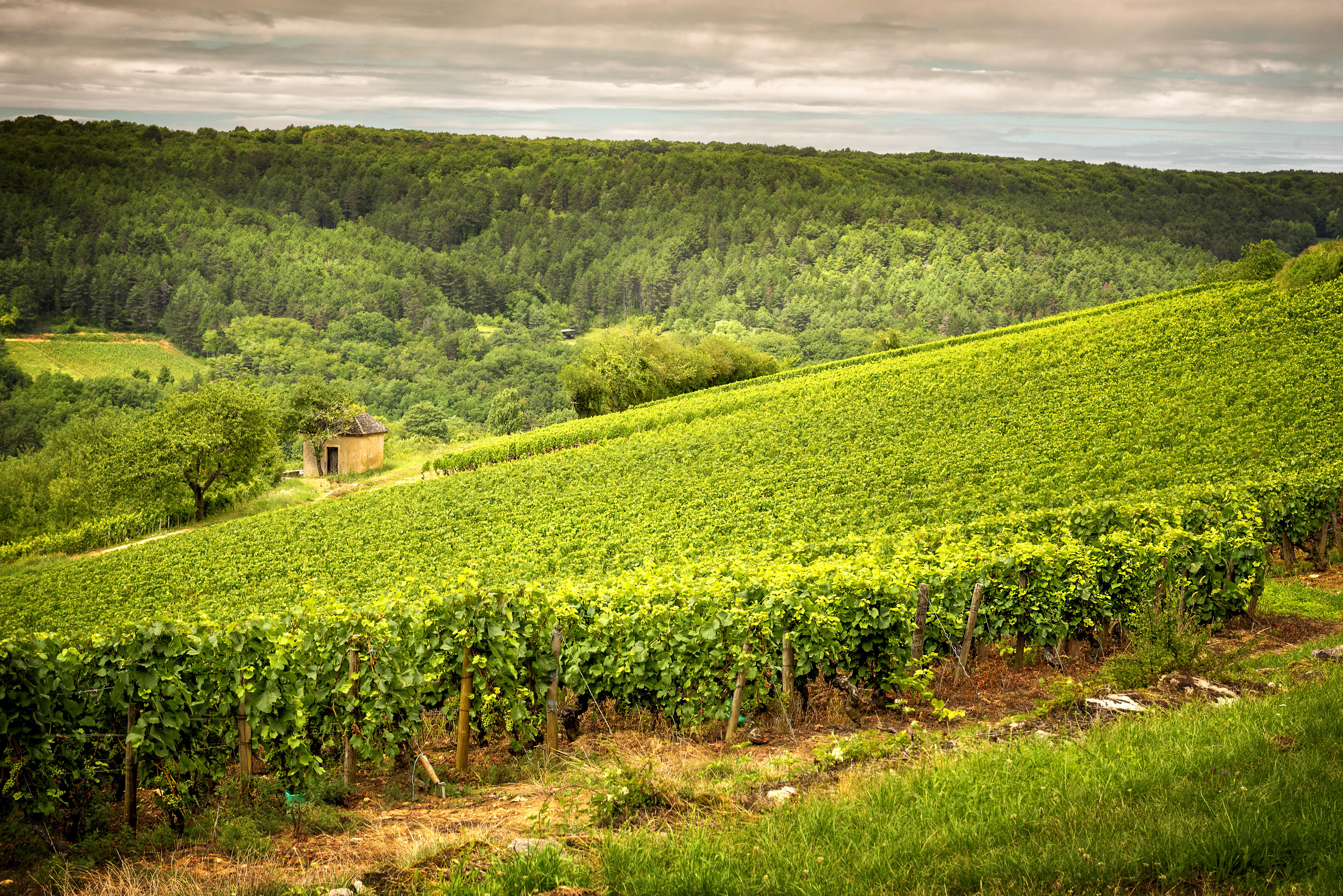2010 Burgundy Vintage Report