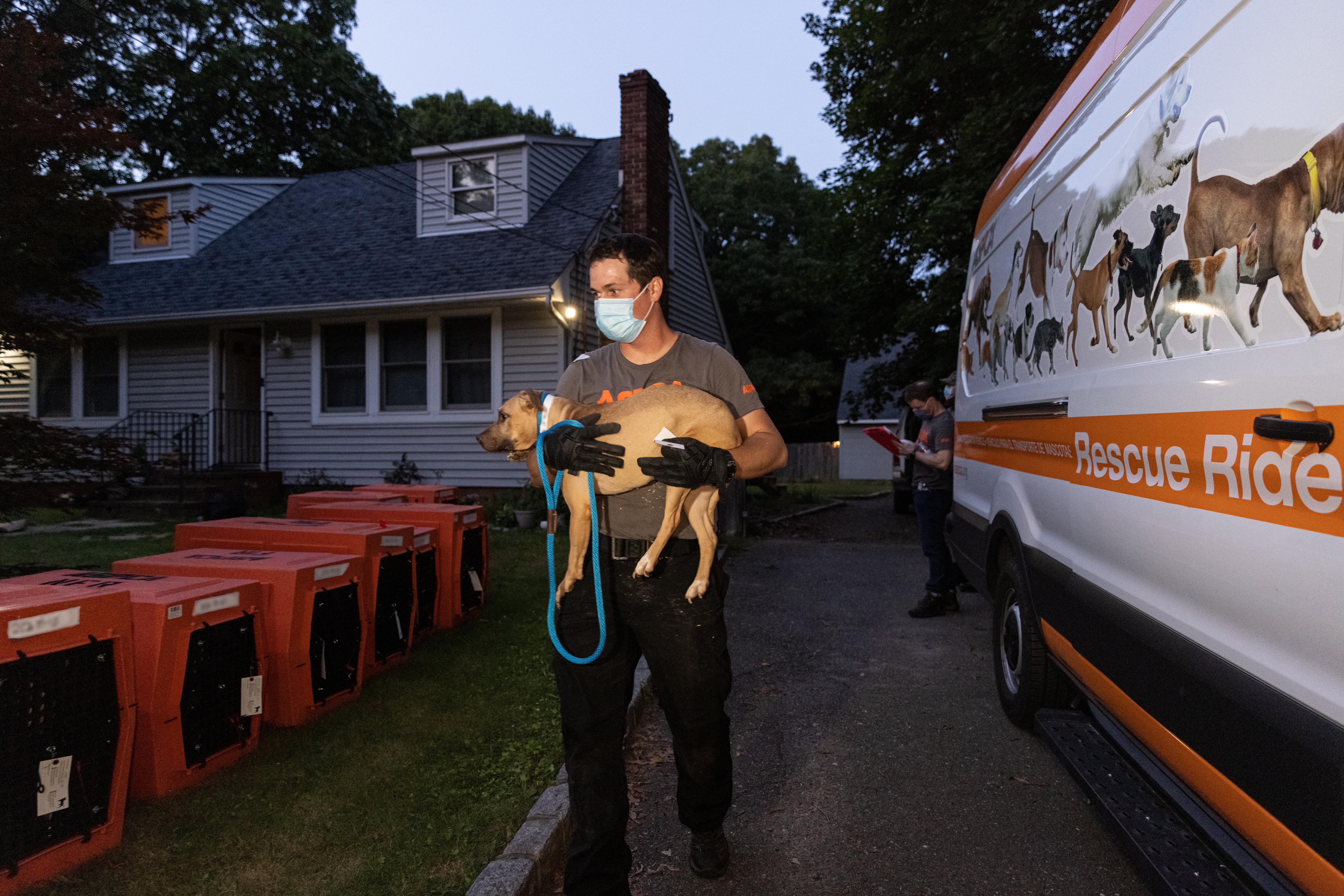 Mężczyzna ratuje psy ze szponów gangu.