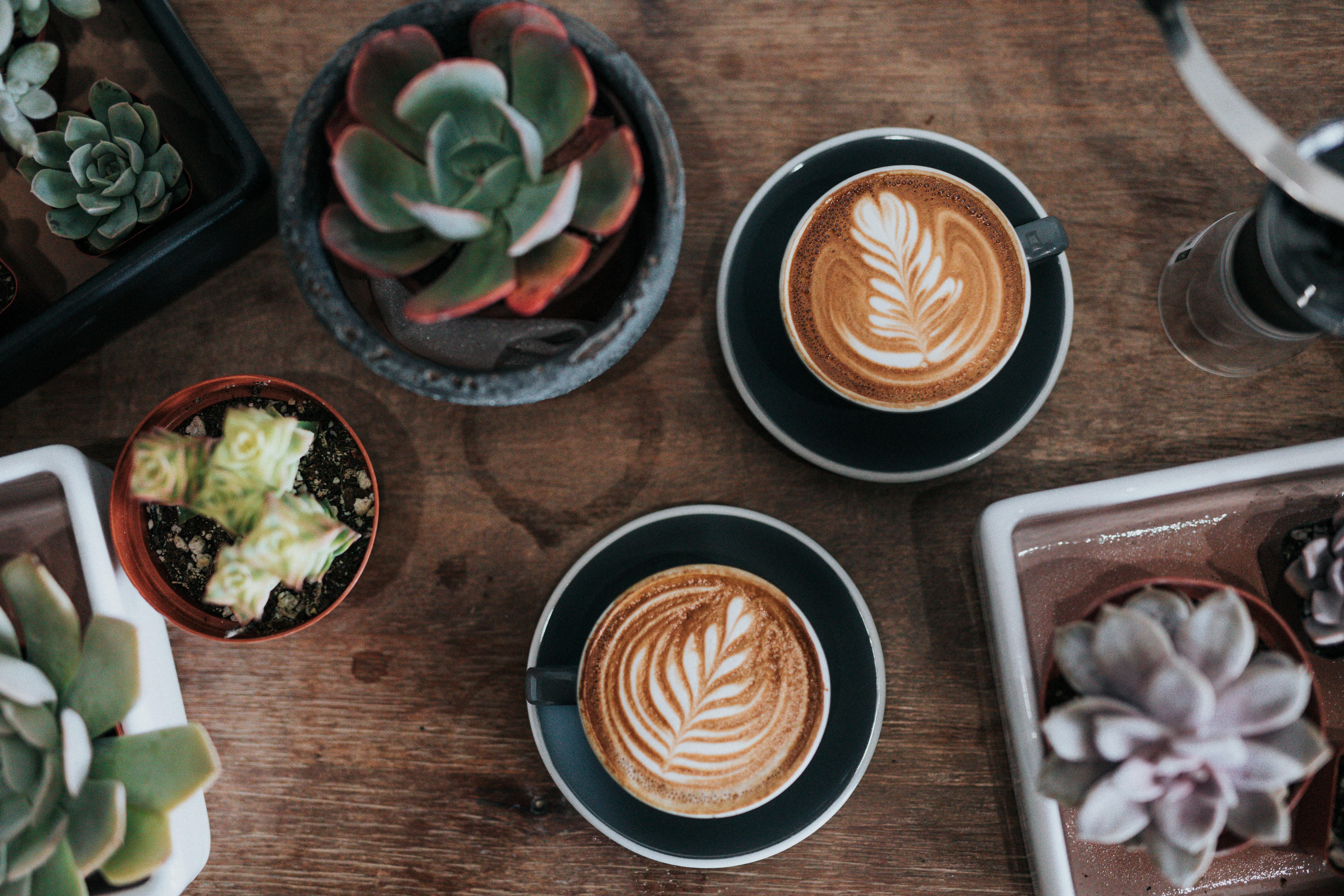 coffee and succulents on table
