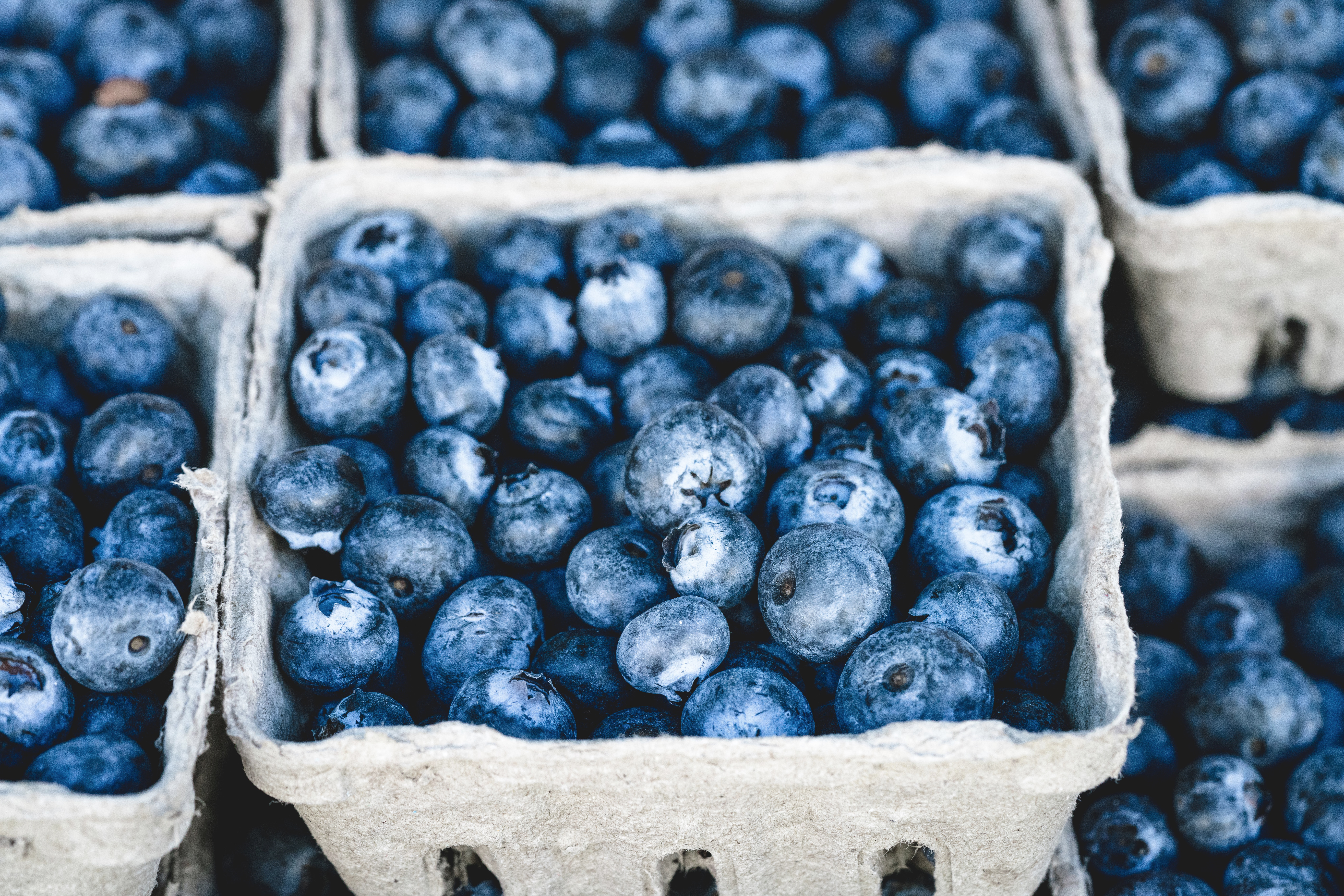 blueberries in cardboard containers